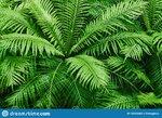 natural-fern-textured-pattern-beautiful-green-leaves-background-ornamental-plant-tropical-rain...jpg