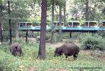 Wildlife-Conservation-Society_0003_Monorail_BZ_00-00-00-1024x684.jpg