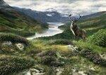 scotland red stag.jpg