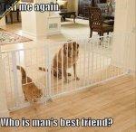 tell-me-again-who-is-mans-best-friend.jpg
