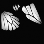 Butterfly_Monarch_F2.png