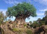 Animal-Kingdom-Tree-of-Life-c-Elisa-Leonelli-2016.jpg