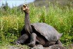 giant-tortoise-e1488230124607.jpg