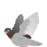Ph4tpigeon