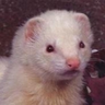 LordFerret