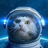 Space DLM